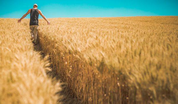 Giovani imprenditori agricoli crescono